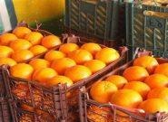 توزیع میوه شب عید در گنبدکاووس آغاز شد