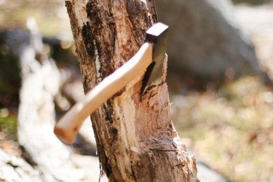 عامل قطع درختان گنبدکاووس دستگیر شد